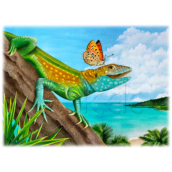 Lizard Landing by Carolyn Steele