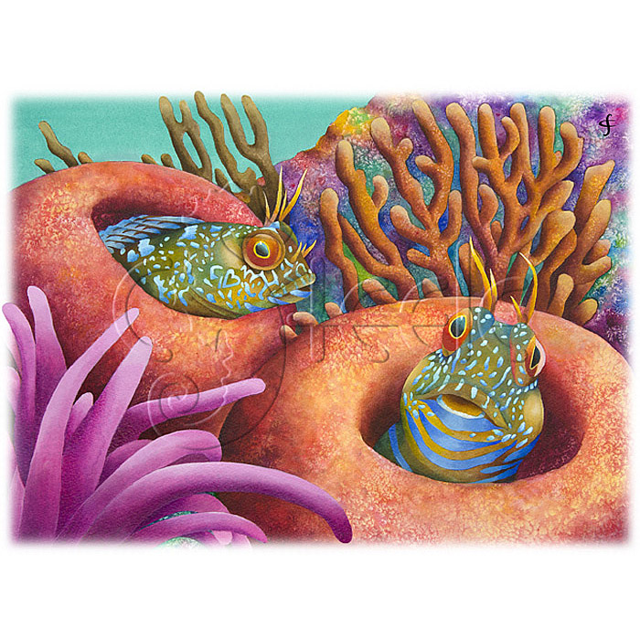 Seaweed Blennies by Carolyn Steele
