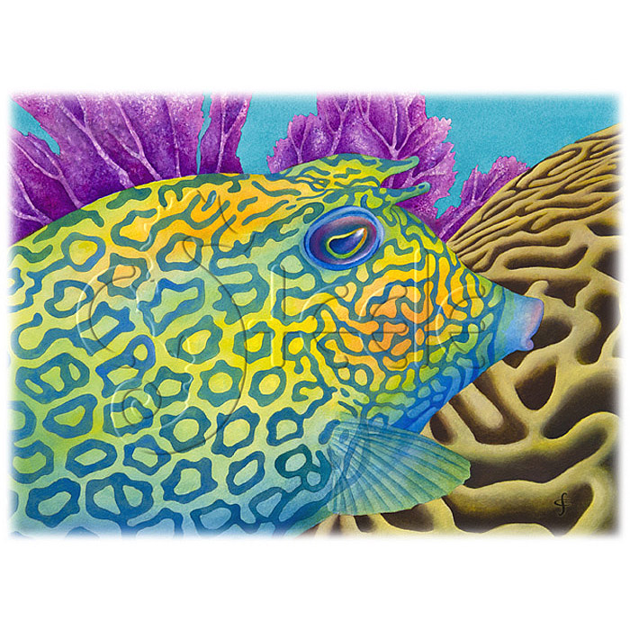 Cowfish by Carolyn Steele