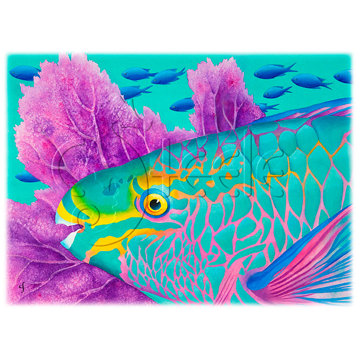 Parrotfish by Carolyn Steele