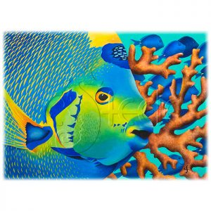 Queen Angelfish by Carolyn Steele
