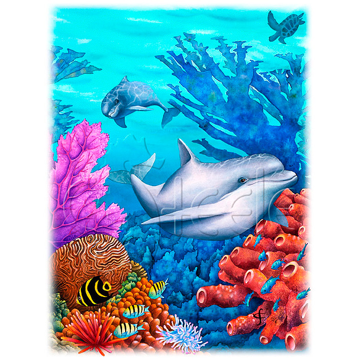 Reef Racers by Carolyn Steele