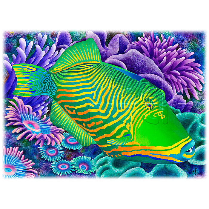 Undulated Triggerfish by Carolyn Steele