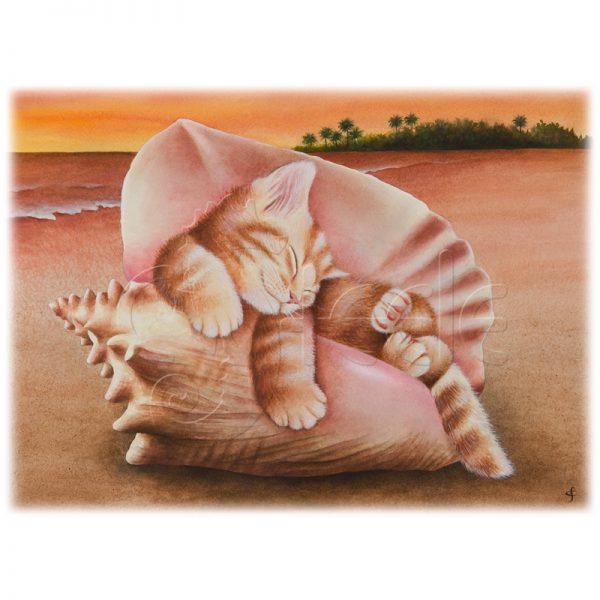 Conch Kitten by Carolyn Steele