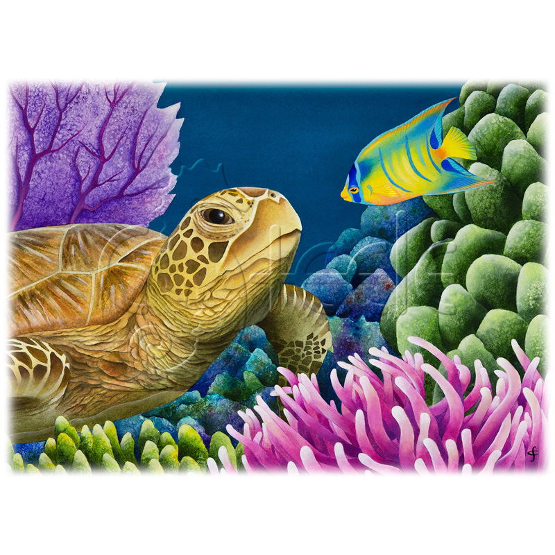 Reef Buddies by Carolyn Steele