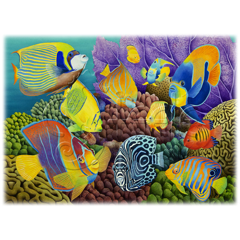 Reef Angels by Carolyn Steele
