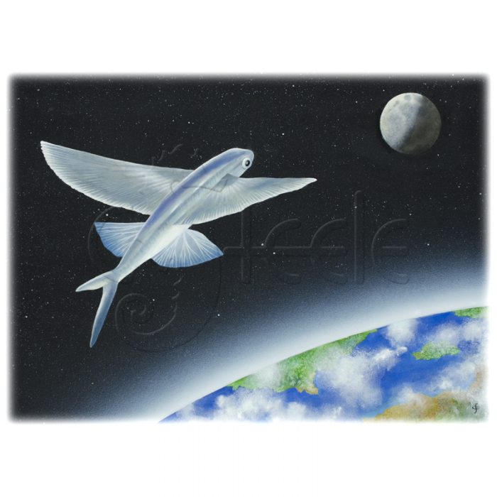 Flying Fish In Orbit by Carolyn Steele