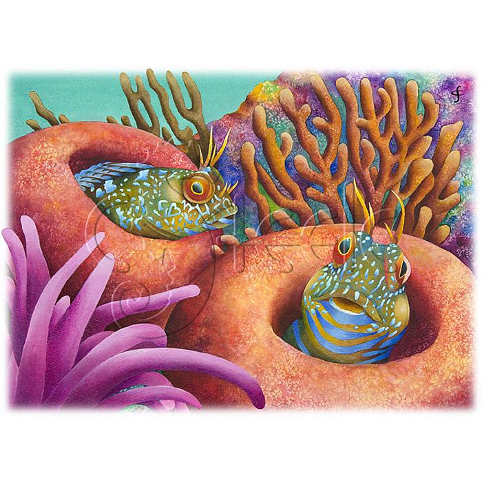 Seaweed Blennies by Carolyn Steele