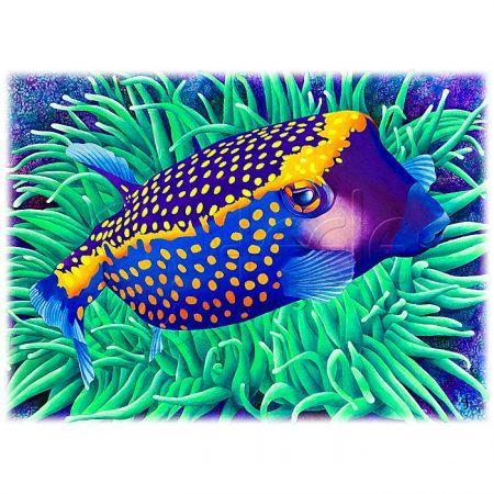 Boxfish Berthold by Carolyn Steele