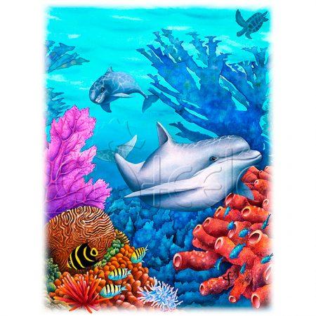 Reef Racers by Carolyn Steele