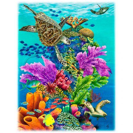 Sea Summit by Carolyn Steele
