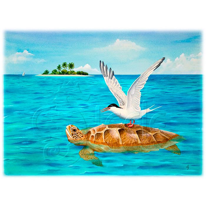 Turtle Island by Carolyn Steele