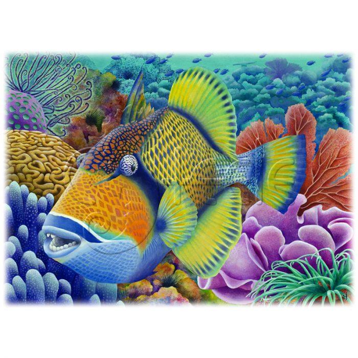 Titan Triggerfish by Carolyn Steele